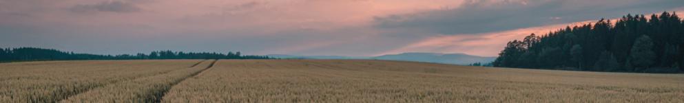 Beautiful Yorkshire Countryside_Sunset Wheat Field